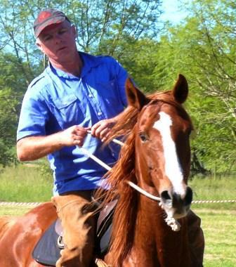 HORSE DISPLAYS