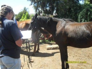Yolande takes down details of all the horses that get treated