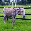 Rescued Donkeys safe at the unit